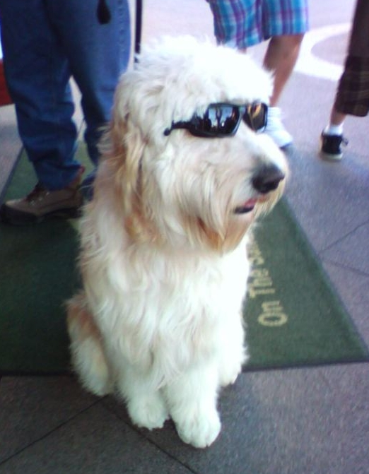 rad shaggy dog