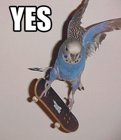radical bird
